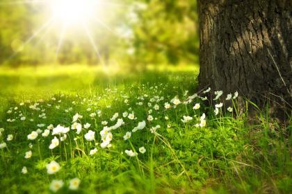 Frühlingsausflug